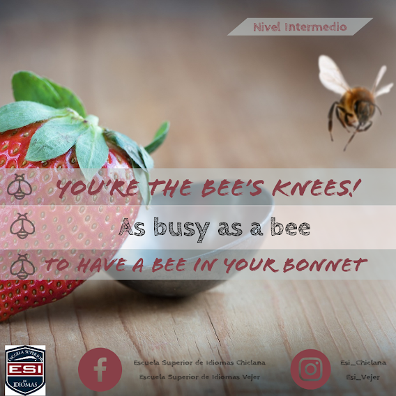 Vocabulary 20: Bee idioms (meaning and examples)